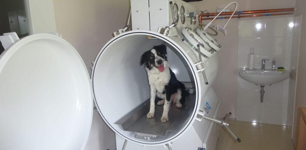 Prvič v Sloveniji: Hiperbarična kisikova komora za male živali
